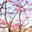 梅、蝋梅、桜(足立区都市農業公園)