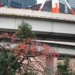 高速道路下の「柿の木」