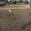 公園ネコのリターン