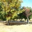 北風の川越運動公園