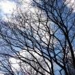 空と冬木立ち