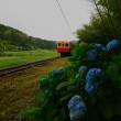 小湊梅雨散歩 トトロの森の駅