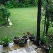 雨になってます。緑が奇麗です。