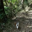 湘南からスカイツリー