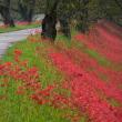 真っ赤な絨毯