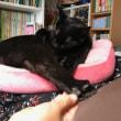 黒猫ジジィ すこし寒い時とすこし暑い時