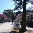 少しの休息に太宰府天満宮に行ってきました。