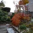 ミノチルの庭 10月4日