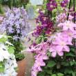 6月の花回廊と小さな野菜屋さん ほたる
