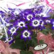 イベント、プレゼントのお花