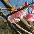 春の兆し・・・。