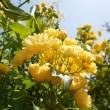 七重八重花は咲けども山吹の実のひとつだになきぞ悲しき