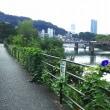 京橋川河岸で