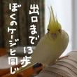 大噴火の日(ポンペイ最後の日)(8月24日)