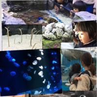 念願の京都水族館に行きましたよ♪( ´▽`)