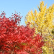 深山公園の紅葉