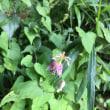 天岩戸神社で見つけた‥植物