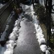 最小限の雪かきをしました!
