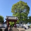 春爛漫の京都 ~ 乙訓寺の牡丹
