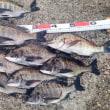 雨が止むのを待って 紀州釣りでの釣行