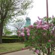 霞ヶ浦総合公園のライラック開花