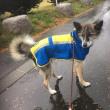 『雨の散歩・・ヤバイわ・・』