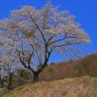 平成30年4月19日 群馬県沼田市に桜を撮影に行く