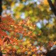 山岳点景:秋、願う色