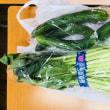 小松菜ときゅうり