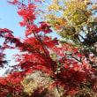 高尾山を紅葉見ハイキング