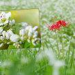 花彩々   蕎麦の花