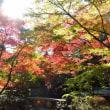 21-Nov-17 太田黒公園で一休み
