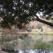 自然豊かな国分寺の庭園・湧水は面白い(⋈◍>◡<◍)。✧♡