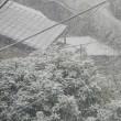 2018年1月22日・・・彩の国・・・比企の丘・・・鳩山の里に雪が降る