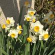 春、間近・・・No.773