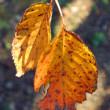 2枚の枯れ葉
