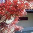 虚子館の冬紅葉