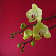 春は花から 180316