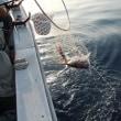 2014 5/30釣果報告