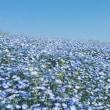きれいなお花にいやされる