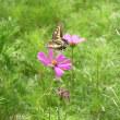 花と蝶と虫と・・・