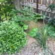 除草後の庭