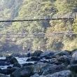 狩野川、鈴ケ渕吊り橋一日早ければ