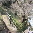 奈良県 西吉野津越の福寿草
