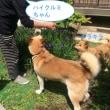 福島は終わっていない!福島犬猫保護ボラの訪問。