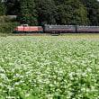 花と遊ぶ 真岡鉄道 その1