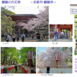 醍醐のお花見  -京都・醍醐寺-