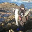 石鯛、ルアー、クロの釣果  11月19日