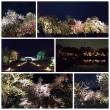 締めの夜桜