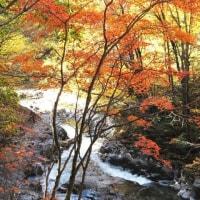 裏磐梯!中津川渓谷の紅葉を満喫!(10/26)